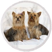 Sitting Pretty Round Beach Towel