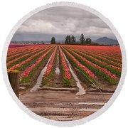 Skagit Valley Tulip Farmlands In Spring Storm Art Prints Round Beach Towel