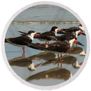 Skimmers With Reflection Round Beach Towel