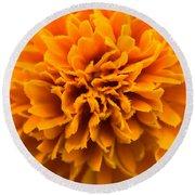 Skunk Flower Orange Round Beach Towel