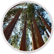 Skyscrapers - A Grove Of Giant Sequoia Trees In Sequoia National Park In California Round Beach Towel