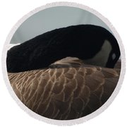 Sleeping Canada Goose Round Beach Towel