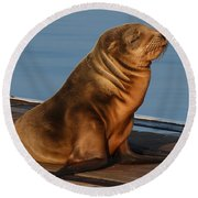 Sleeping Wild Sea Lion Pup  Round Beach Towel