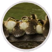 Sleepy Babies Round Beach Towel by Mircea Costina Photography