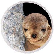 Sleepy Baby Sea Lion Round Beach Towel by Susan Wiedmann