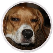 Sleepy Beagle Round Beach Towel by John Telfer