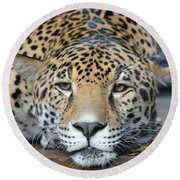 Sleepy Jaguar Round Beach Towel by Richard Bryce and Family