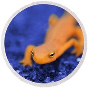 Sly Salamander Round Beach Towel by Luke Moore