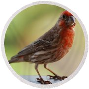 Small Brown And Red Bird Round Beach Towel by DejaVu Designs