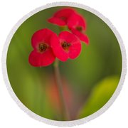 Small Red Flowers With Blurry Background Round Beach Towel