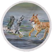 Smooth Collie Trying To Herd Geese Round Beach Towel