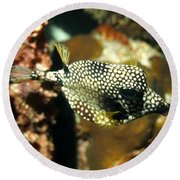 Round Beach Towel featuring the photograph Smooth Trunkfish by Amy McDaniel