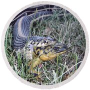 Round Beach Towel featuring the photograph Snake With Legs by James Peterson