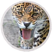 Snarling Jaguar  Round Beach Towel by Richard Bryce and Family