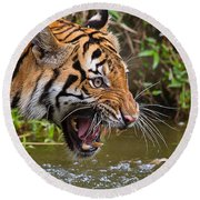 Snarling Tiger Round Beach Towel