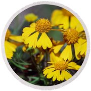 Round Beach Towel featuring the photograph Sneezeweed by Ester  Rogers