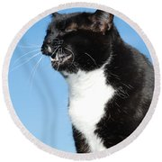 Sneezing Cat Round Beach Towel