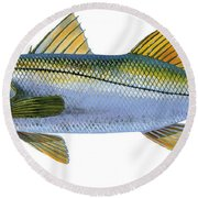 Snook Round Beach Towel by Carey Chen