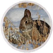 Snow Bunny Round Beach Towel by Penny Meyers