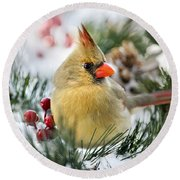 Round Beach Towel featuring the photograph Snow Cardinal by Christina Rollo