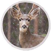 Snow Deer 1 Round Beach Towel
