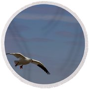 Snow Goose Approach Round Beach Towel by Mike Dawson