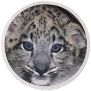 Snow Leopard Cub Endangered Round Beach Towel