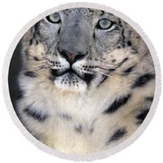 Snow Leopard Portrait Endangered Species Wildlife Rescue Round Beach Towel