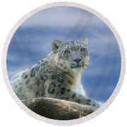 Snow Leopard Round Beach Towel by Sandy Keeton