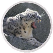 Round Beach Towel featuring the photograph Snow Leopard Yawn by Neal Eslinger