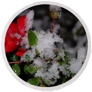 Round Beach Towel featuring the photograph Snow Rose by Mim White
