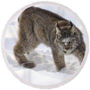 Snow-shovelling Lynx Round Beach Towel