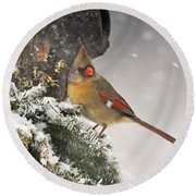 Female Cardinal Snowing Round Beach Towel by Nava Thompson