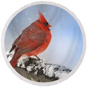 Round Beach Towel featuring the photograph Snowing On Red Cardinal by Nava Thompson