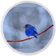 Snowy Bluebird Round Beach Towel by Nava Thompson