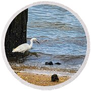 Snowy Egret At The Shore Round Beach Towel