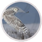 Snowy In Action Round Beach Towel by Mircea Costina Photography