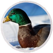 Round Beach Towel featuring the photograph Snowy Mallard by Eleanor Abramson