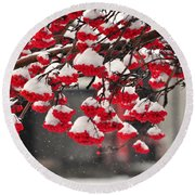 Round Beach Towel featuring the photograph Snowy Mountain Ash Berries by Fran Riley