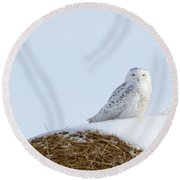 Round Beach Towel featuring the photograph Snowy Owl by Alyce Taylor