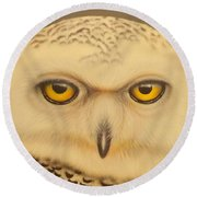 Round Beach Towel featuring the painting Snowy Owl by Darren Robinson