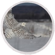 Snowy Owl In Flight Round Beach Towel by Mircea Costina Photography