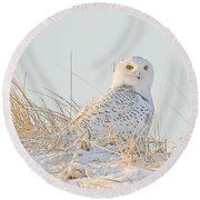 Snowy Owl In The Snow Covered Dunes Round Beach Towel