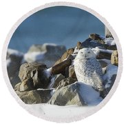 Snowy Owl On A Rock Pile Round Beach Towel