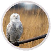 Snowy Owl On Branch Round Beach Towel