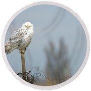 Snowy Owl On Fence Post 2 Round Beach Towel