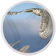Snowy Owl Over The Dunes Round Beach Towel