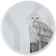 Snowy Owl Perfection Round Beach Towel