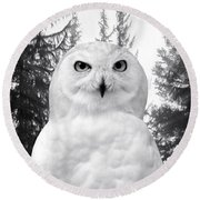 Round Beach Towel featuring the photograph Snowy  by Adam Olsen