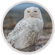 Snowy Owl Watching From A Driftwood Perch Round Beach Towel